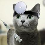 Кошки лечат!