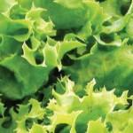 Отличные заправки для салатов