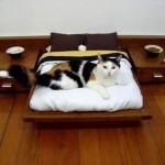 Мир кошачьего дизайна.