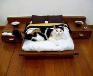 Мир кошачьего дизайна