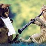 Музыка для кошек.