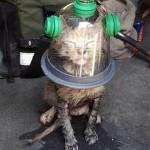 Американские пожарные спасают кошек и собак с помощью специальных кислородных масок.