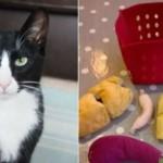 Знаменитый британский кот-клептоман вновь «отличился».
