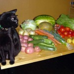 Вегетарианская еда вредна для кошек?