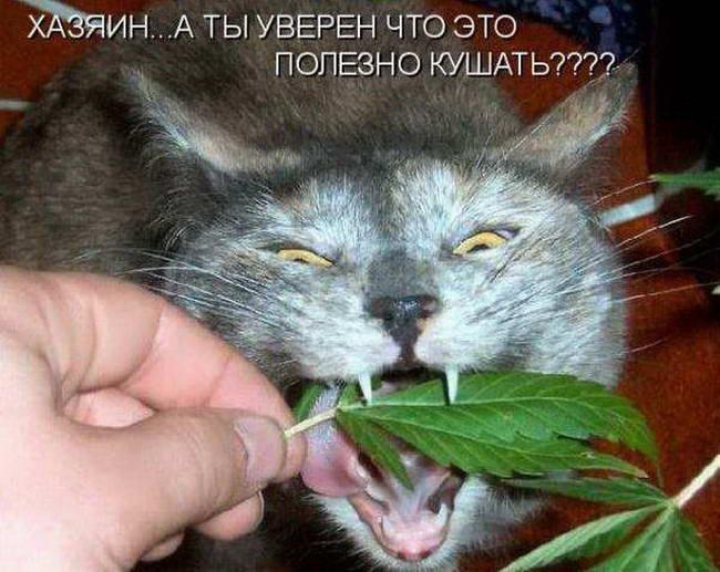 dp-vegetarianskaya-eda-vredna-dlya-koshek-03