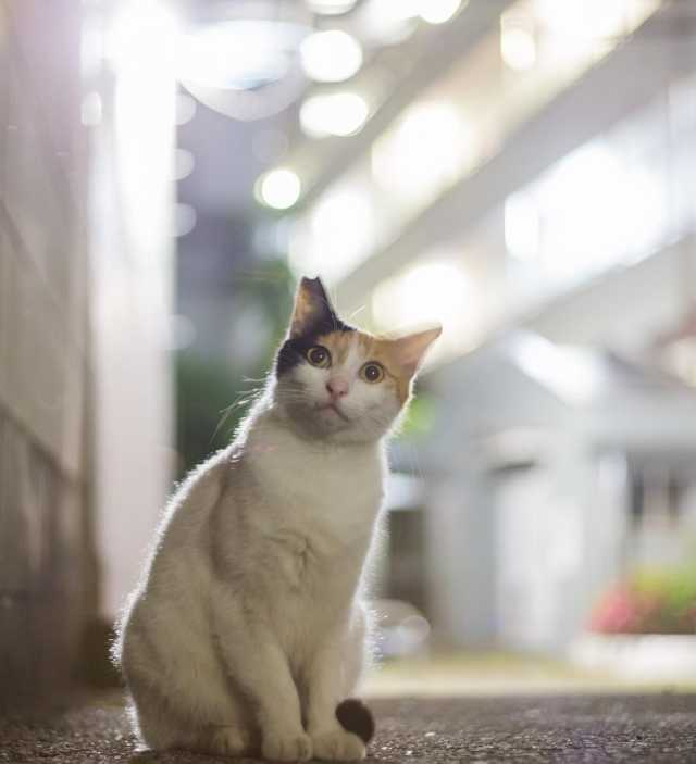 dp-kotofoto-Masayuki-Oki-001