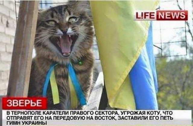 dp-novosti-politiki-i-ekonomiki-iyun-2016-20