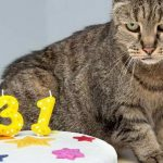 Старейший кот планеты живёт в Великобритании?