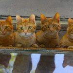 Украина вошла в ТОП-10 стран с наибольшим количеством кошек.