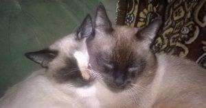 Хроники кошачьего семейства.