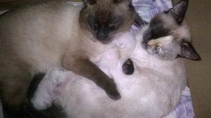 Хроники кошачьего семейства. Часть 2.