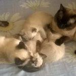 Хроники кошачьего семейства. Часть 3
