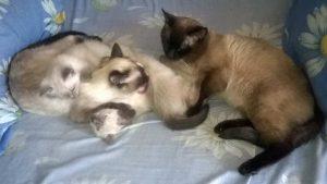 Хроники кошачьего семейства. Часть 3.